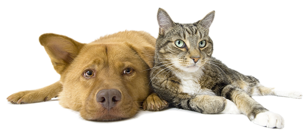 Dog And Cat iso